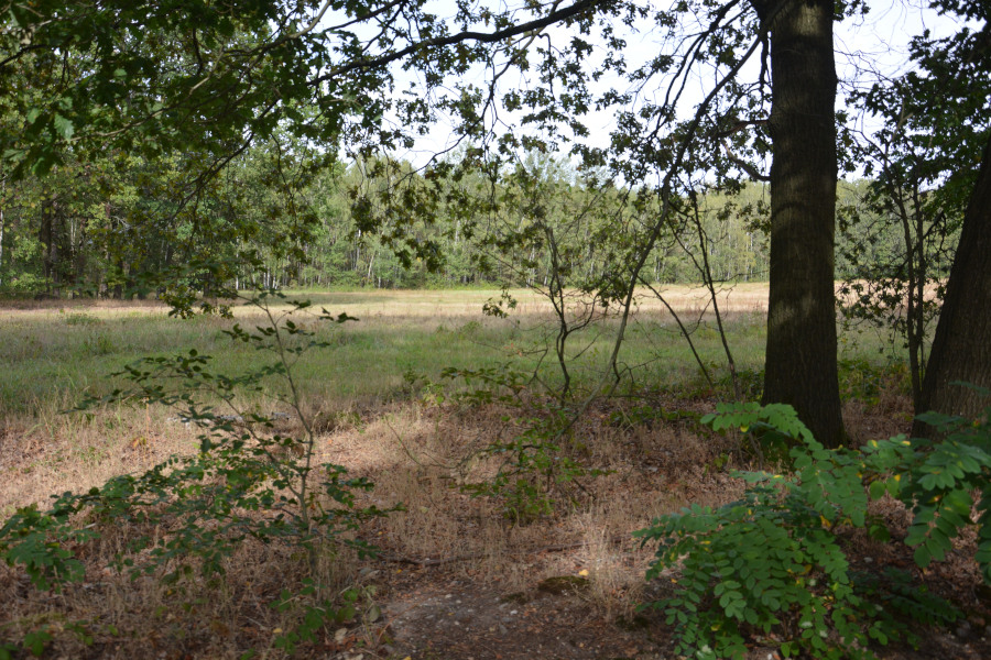 Dahlener Heide - Schildau: Waldheide