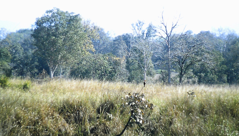 Kanha - Nationalpark
