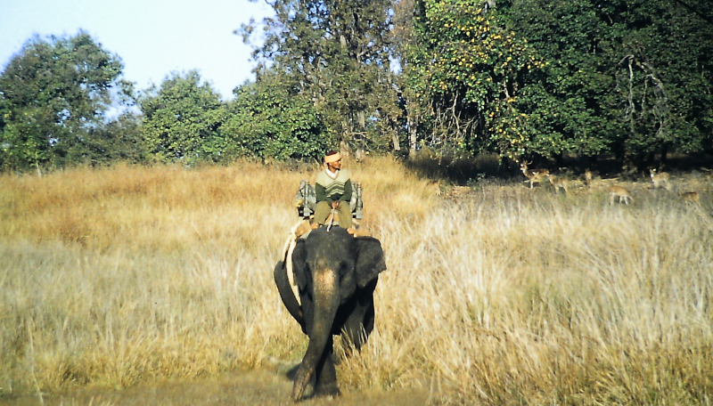 Kanha - Nationalpark Ranger
