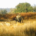 Kanha - Nationalpark Elefanten-Ranger