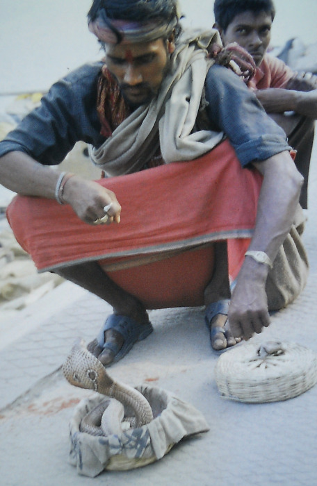 Indien: Varanasi Schlangenbeschwörer