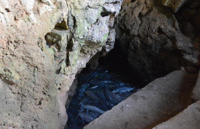 Thailands Fish Cave