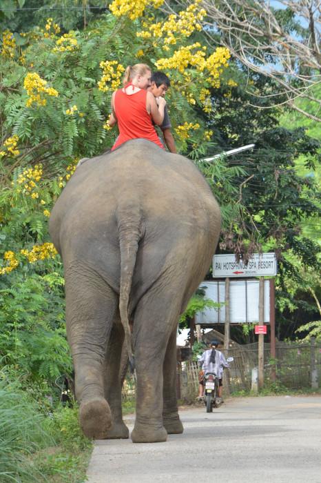 Elefantenreiter-Tussi
