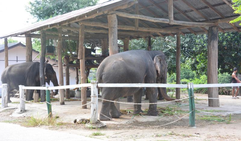 Elefanten-Carport in Thailand