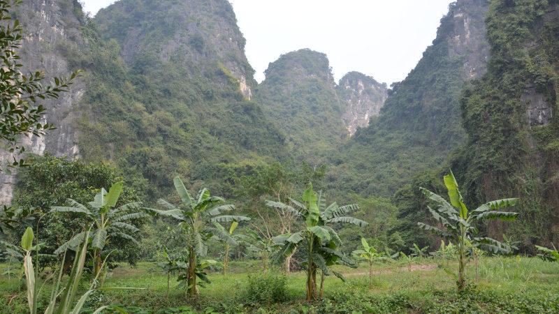 Vietnam Felslandschaft mit Bananen