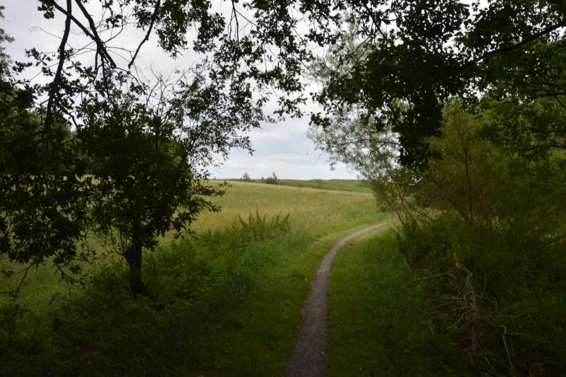 Rügen-Radtour Ostseeradweg auf alten Kleinbahndämmen