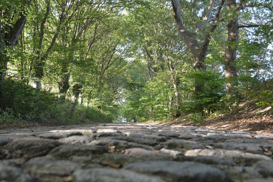 Rügen Ostseeradweg  Mustitzer Allee - kein guter Radweg - Belag