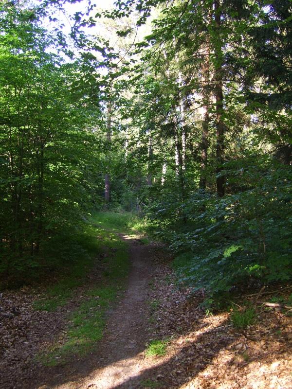 Radweg Dahlener Heide