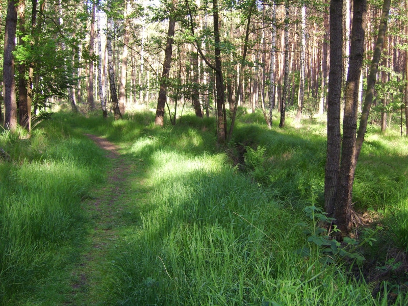 Dahlequelle Dahlener Heide