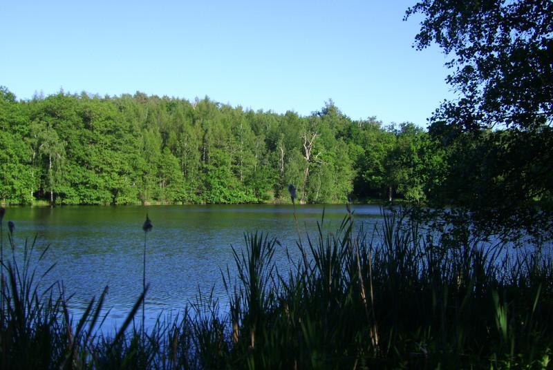 Waldsee Dahlener Heide