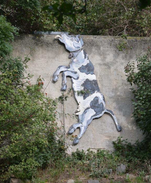 Schildau - Stadt der Schildbürger : Kuh an Kirchberg - Mauer